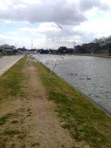 Birds Flying at Bayou St. John