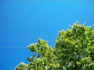 Blue Sky in the Marigny