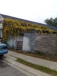 Flowers on Decaying Garage at St. Claude and Piety