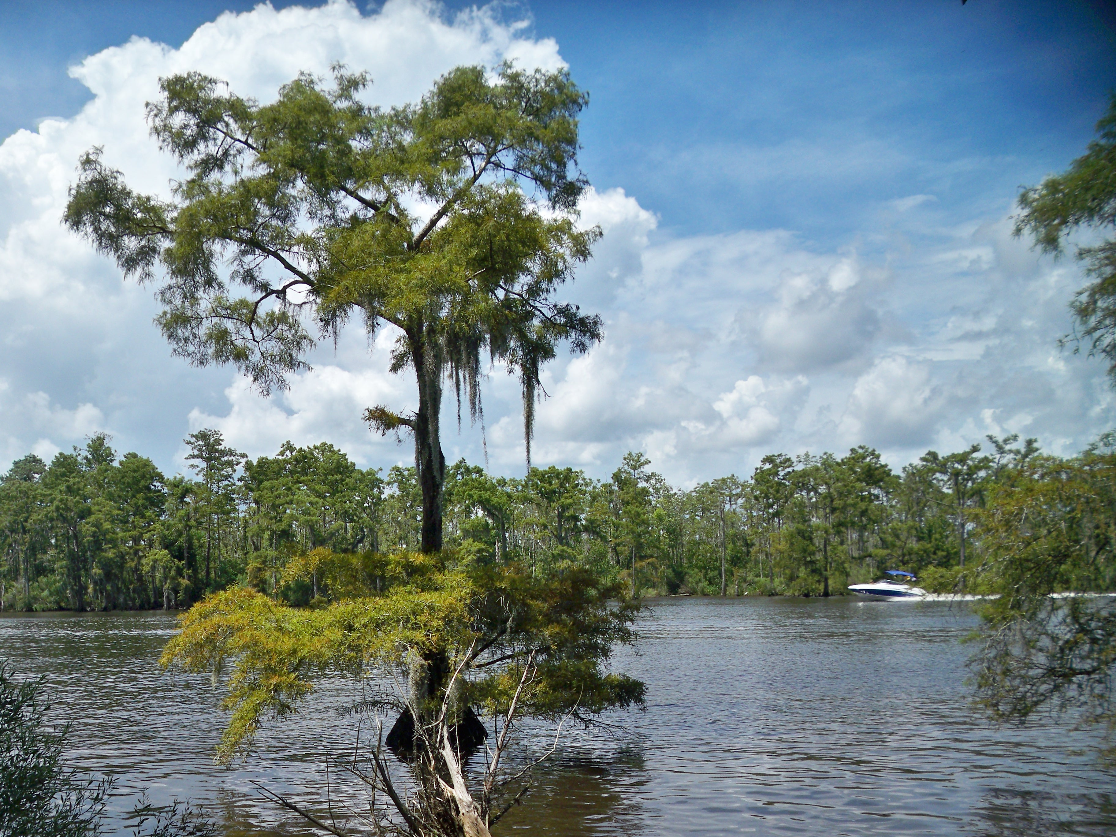 Tchefuncte River at Fairview-Riverside State Park | What I Saw