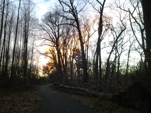 The Sun Going Down Behind Bare Trees on the Jones Falls Trail in Druid Hill Park
