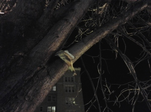 Banana Peel in a Tree at 32nd & St. Paul