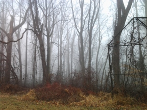 Fog and Trees in Leakin Park By the Old Baseball Diamond at Seminole & Kevin Road