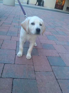 Puppy at McHenry Row in Locust Point