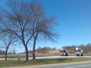 Trees and Trucks at Falls & Shawan in Cockeysville
