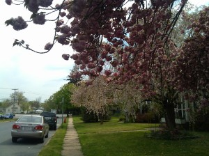 Flowery Trees at Oregon & Link