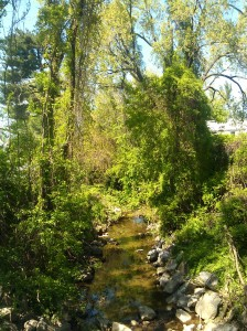 View From a Footbridge Near Ashbourne & June in Arbutus