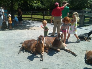 Patient Goats at the Maryland Zoo in Druid Hill Park