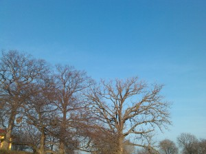 Bare Trees Against a Blue Sky at the Druid Hill Park Reservoir