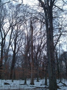 Bare Trees on the Gwynns Falls Trail in Druid Hill Park