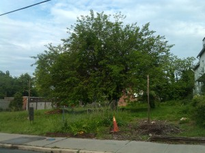 Tree and Safety Cone on Old York Road & 37th