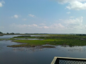View From a Lookout at Bombay Hook National Wildlife Reserve