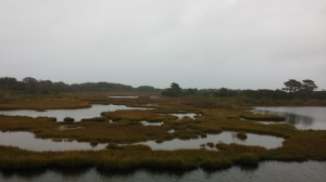 Marshland at Assateague Island National Seashore