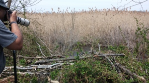 Birdwatching on North Point State Park's Black Marsh Trail