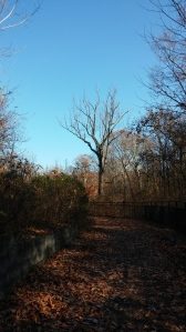 View On the Jones Falls Trail Behind Druid Hill Park
