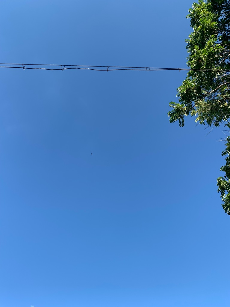 Picture of a bright and cloudless blue sky with a couple of wires stretching across the top quarter of the picture. Green tree branches peek out on the right side. There's a tiny speck in the middle of the image. It's a bird.